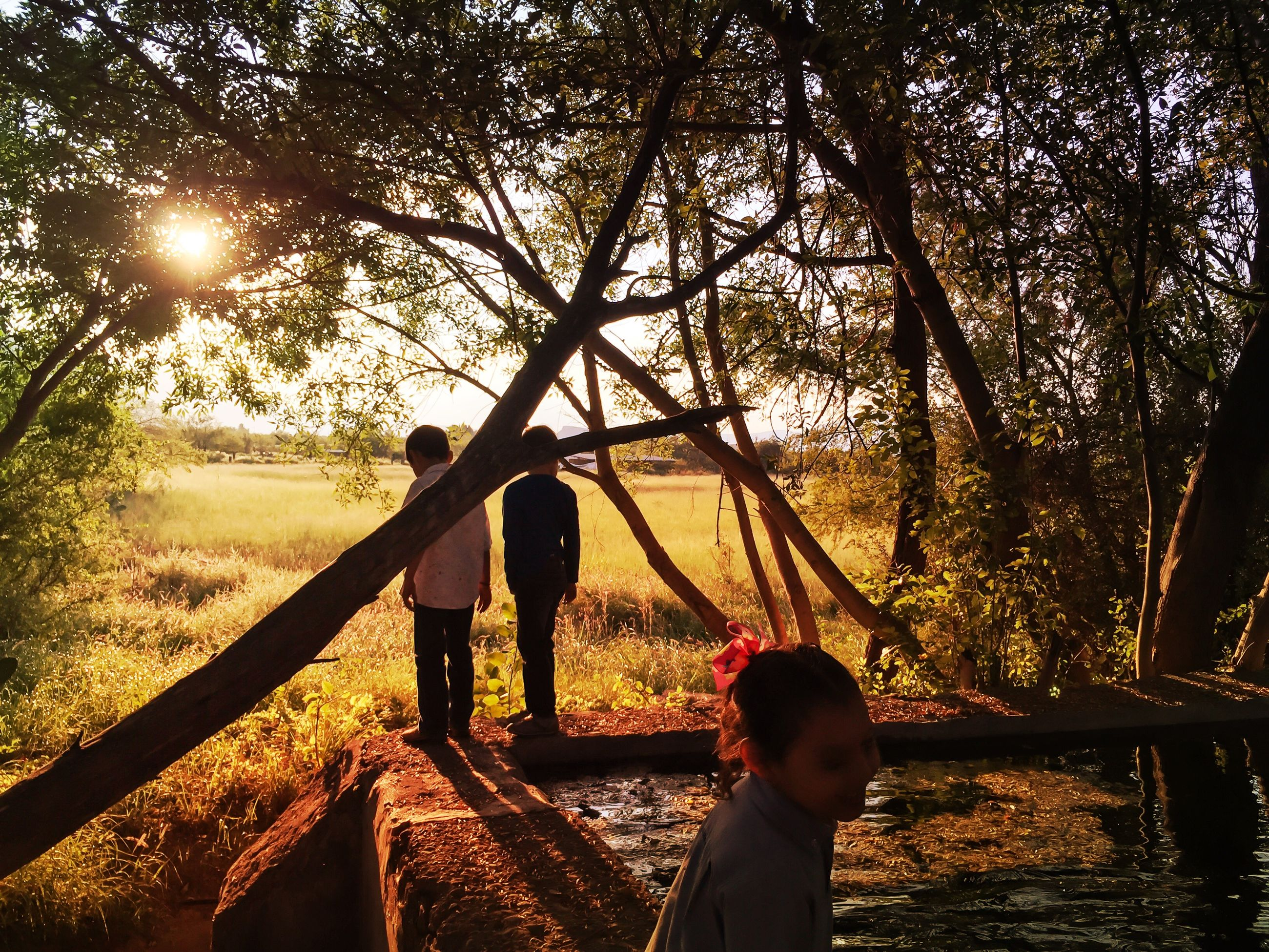 tree, lifestyles, leisure activity, standing, water, casual clothing, tranquility, nature, sunlight, childhood, rear view, sun, sitting, three quarter length, love, togetherness, lake