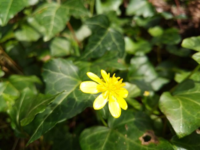 Flower Growth Nature Plant Beauty In Nature Freshness Petal Flower Head Fragility Yellow Blooming Leaf Close-up Outdoors Green Color Pollen Day No People