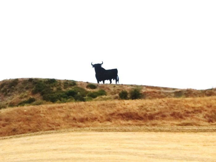 No People Day Nature Tranquility Toro Taureau Toro De Osborne
