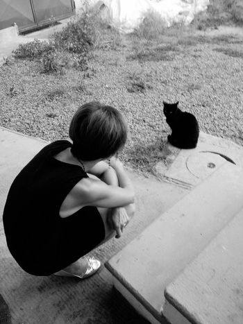 Animal Dark Blackandwhite Black And White BLackCat