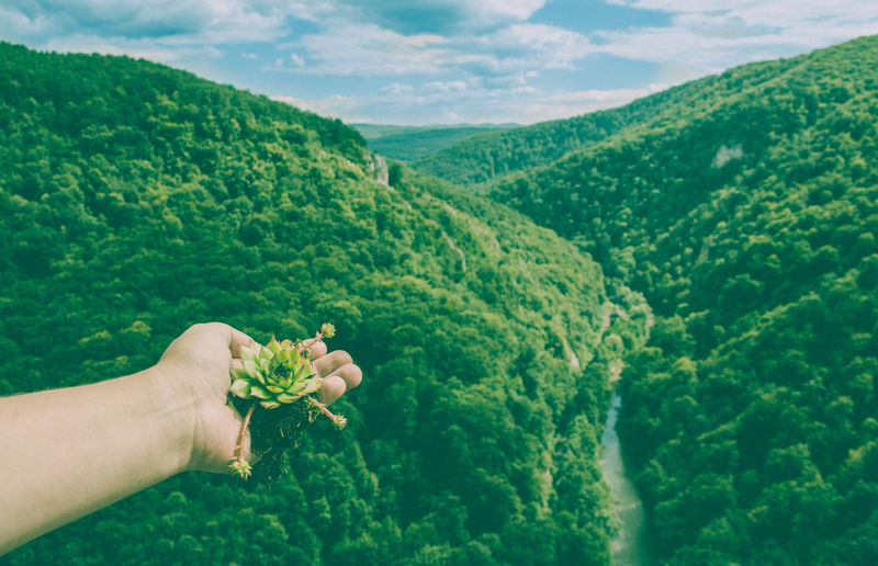 Person holding succulent plant against green mountain