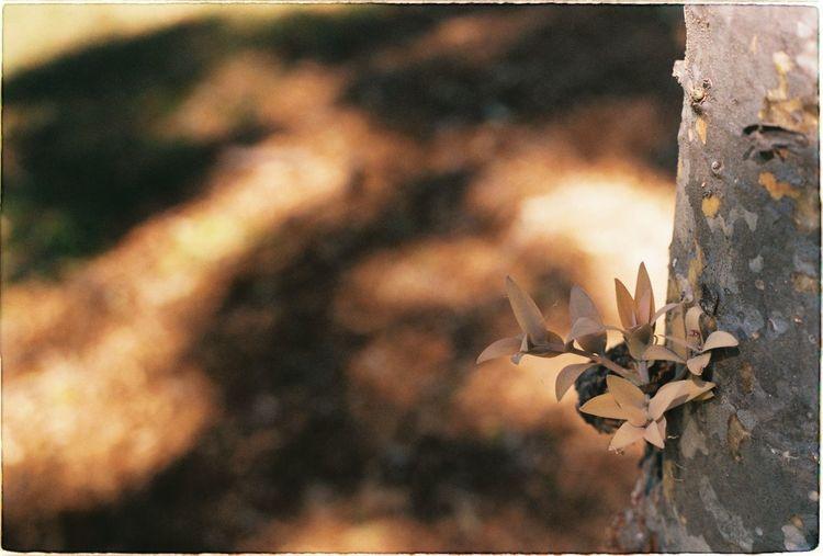 Brown leaves in
