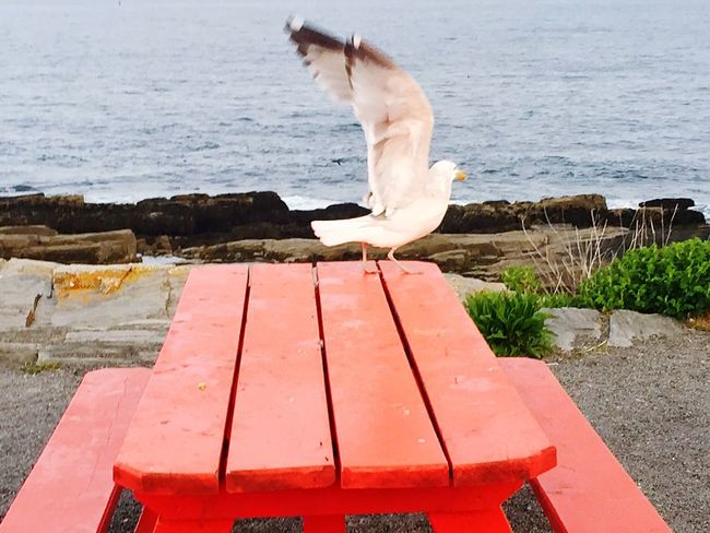 Animal Themes Outdoors Beauty In Nature First Eyeem Photo EyeEmNewHere Eye4photography  Seagulls And Sea Seagulls TakeOff Flylikeabird Spread Wings