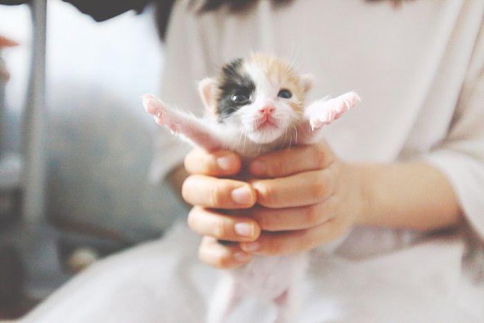 "Kitty Cat Kitten Super Kitty 눈 뜬 ""봄이"" Bom-E"
