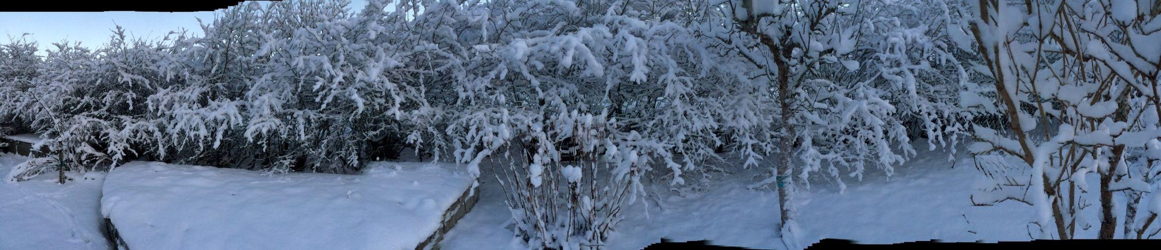 Snow Winter Deepfreeze Panorama