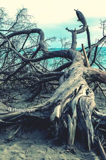 Low angle view of tree roots