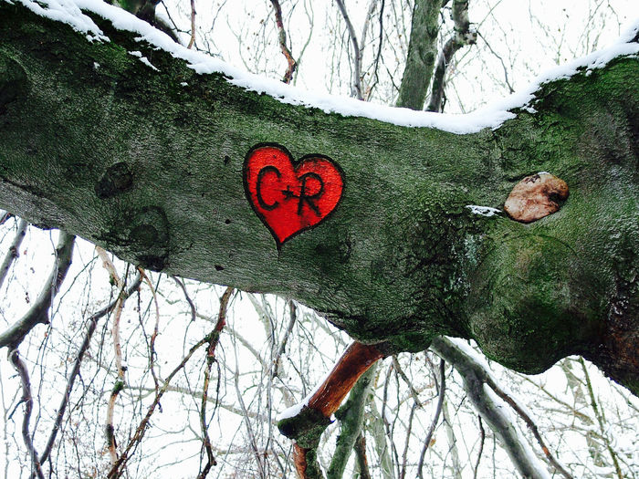 Nature Outdoors Flora Floral Photography Vegetazione Heart Shape Tree Love Plant Positive Emotion Trunk Tree Trunk Day Emotion Close-up Red Romance Creativity Beauty In Nature
