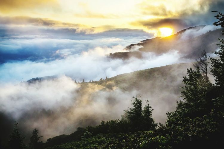 Puncak Mountain Morning Forest Fog Tree Cloud - Sky Travel Mountain Peak Sky Nature Pinaceae Outdoors Smoking - Activity Above Yellow Landscape Water No People Natural Parkland Freshness Be. Ready.