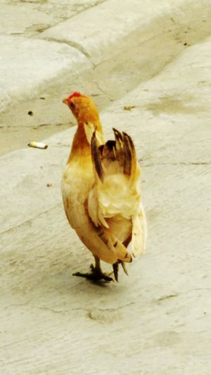 quit smoking will u Chickens Are Pets Home Family Matters Day Off Family❤ Jakarta Indonesia Catwalk
