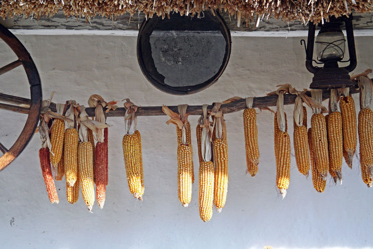 Corns Hanging Against White Wall
