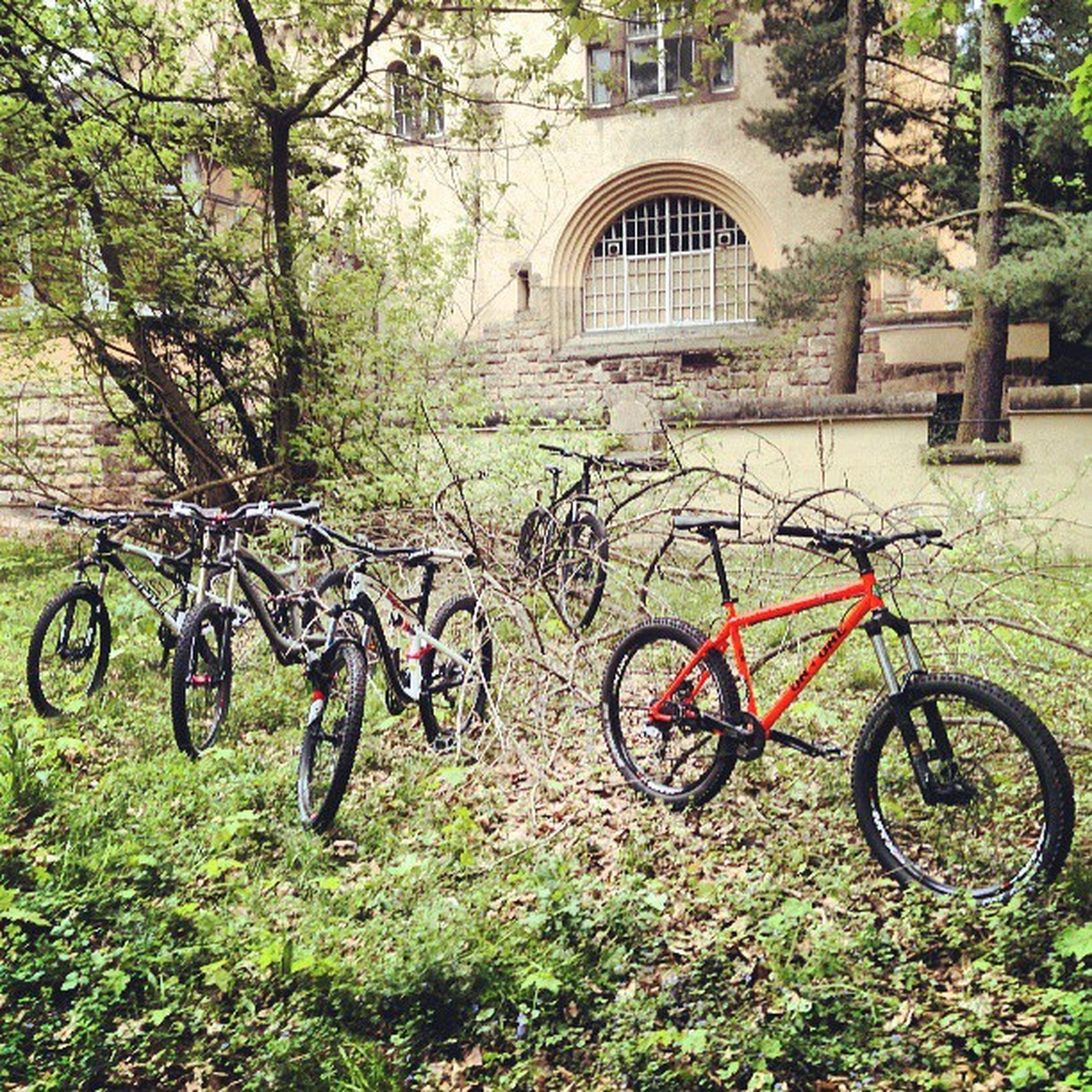 bicycle, building exterior, architecture, built structure, mode of transport, transportation, land vehicle, tree, grass, stationary, parked, house, plant, green color, arch, day, parking, outdoors, growth, residential structure