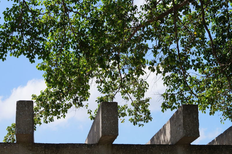 Plant Tree Sky Low Angle View Nature Architecture Built Structure Beauty In Nature Building Exterior Sunlight Tranquility Green Color No People Building Cloud - Sky Parque La Choca VillahermosaTabasco