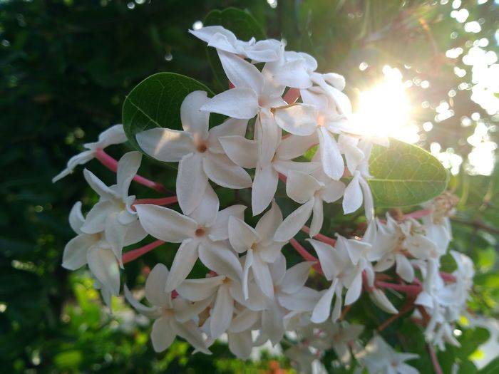 White Pelu Flower First Eyeem Photo Welcome To Black
