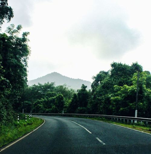 Tree Plant Road Transportation Sky Nature Direction The Way Forward Day No People Cloud - Sky Tranquility Sign Symbol Road Marking Beauty In Nature Marking Tranquil Scene Growth Green Color Outdoors Crash Barrier Dividing Line