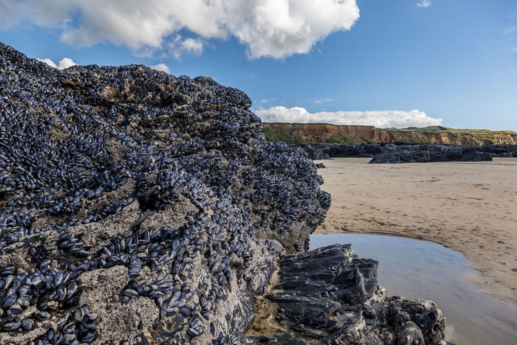 Cornwall Travel Destinations Travel Photography Landscape Mussels On Rock Mussels Godrevy Beach Ocean Sea And Sky Sea Sand Water Beach