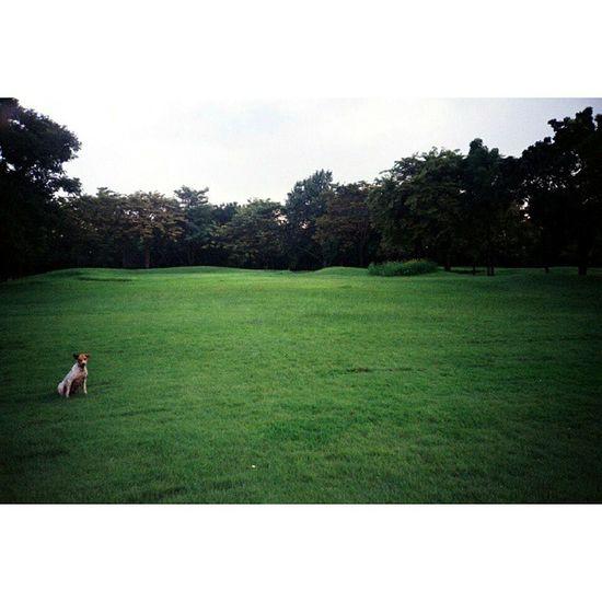 """"""" เป็นหมาเมืองที่โหยหาธรรมชาติ """" Camera : LC-A Film : Fuji Superia 100 Dog Bangkok Thailand Afterzero LCA Filmphotography Filmisnotdead Fujifilm Fuji Superia Film 35mm Ishootfilm Analogue Buyfilmnotmegapixels"""