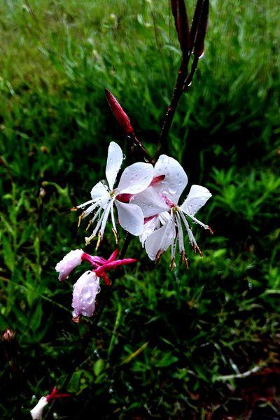 Flower Morning Running