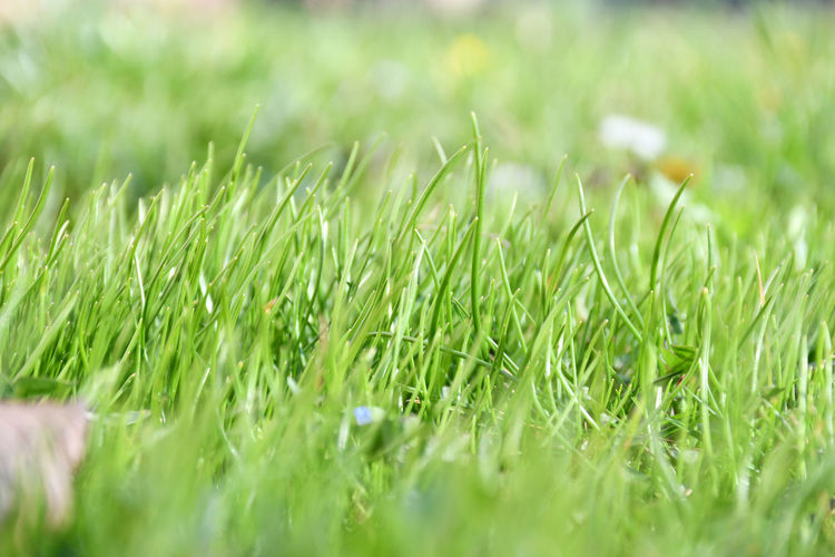Grass growing in field - new life