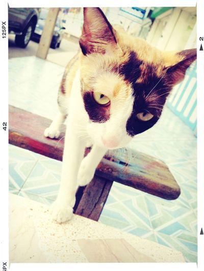 The cat Hi! Take Movie Cat