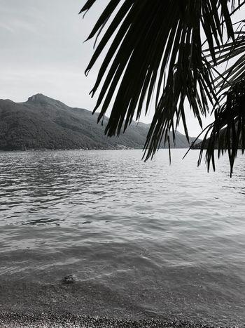 Lugano, Switzerland Lake View Tranquility Palm Tree No People