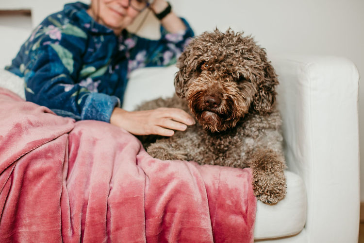 Midsection of woman with dog on sofa at home