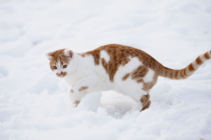 Winter tomcat Winter Animal Themes Cat Close-up Day Domestic Animals Domestic Cat Feline Mammal No People One Animal Outdoors Pets Sky Tomcat Winter Cat