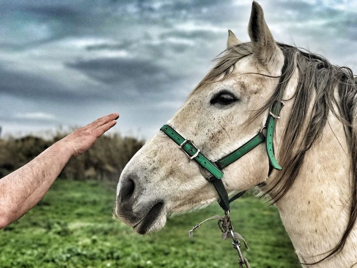 Cropped hand of man reaching towards horse at field against cloudy sky