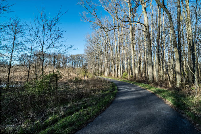 Baltimore Baltimore Maryland Bare Tree Beauty In Nature Branch Clear Sky Cufotos Day Forest Grass Maryland Nature Nikon Nikonphotography No People Outdoors Plant Road Scenics Sky Sunlight The Way Forward Tree