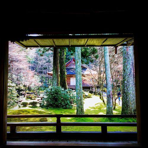 三千院 大原 有清園 京都 Kyoto 寺社仏閣 Relaxing