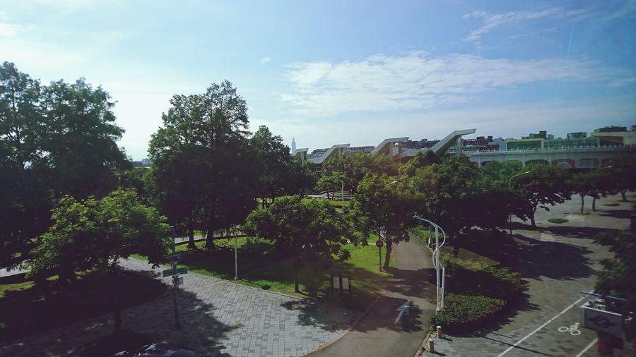 Park Tree Sky