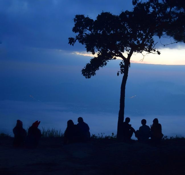 Evening Sky Travel Destinations People Friends Couple Backgrounds Silhouette Silhouette Photography Tree Silhouette Pinaceae Night Tree Trunk Pine Tree Dramatic Sky Tree Area Landscape Beauty In Nature Tranquility Cloud - Sky Sky Blue Outdoors Star - Space Tranquil Scene Sunset