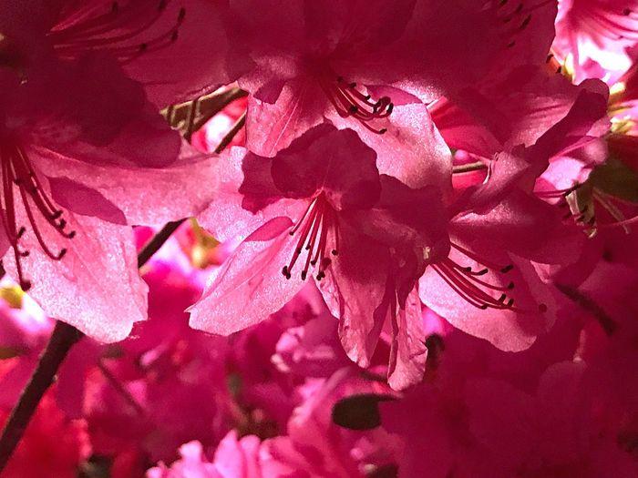 Beauty In Nature Flower Pink Color Nature Leechangwon Iphonephotography Beauty 가끔은 핑크가 좋을때가 있다. Blackpink