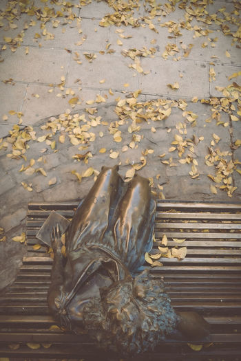 High angle view of dry leaves on bench