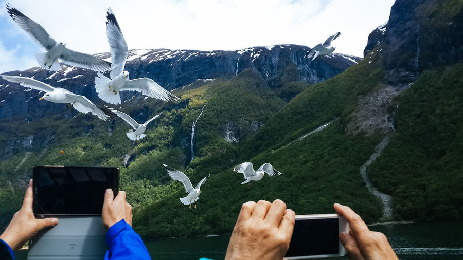 Beauty In Nature Fjordsofnorway Flying Gull Mountain Mountain Range Nature Norway Smartphonephotography Tourism Tourist Vacation Water Internet Addiction People And Places People And Places. Miles Away