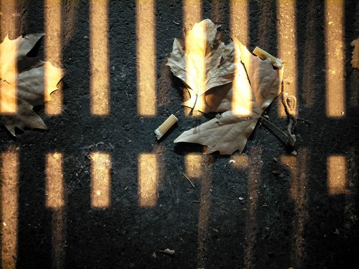 shadows Autumn