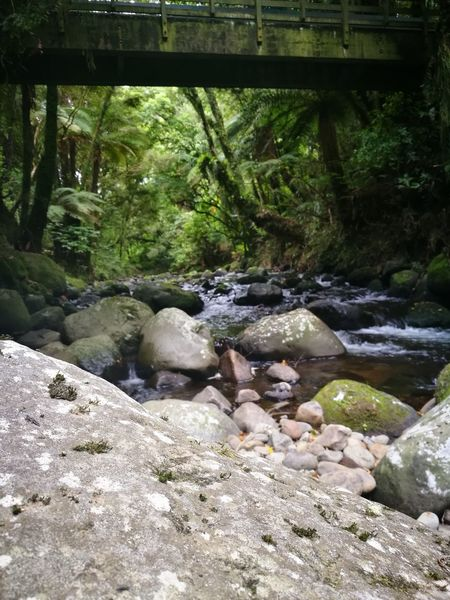 Water Nature Day Real People Outdoors Tree Stream - Flowing Water Greenery Rocks And Water bridge - man made structure Wooden Bridge Beneath