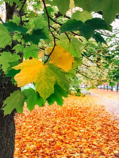 Plant Growth Plant Part Leaf Nature Beauty In Nature Autumn Tranquility Orange Color High Angle View Tree Outdoors Flower Green Color Sunlight Flowering Plant Change No People Day Yellow