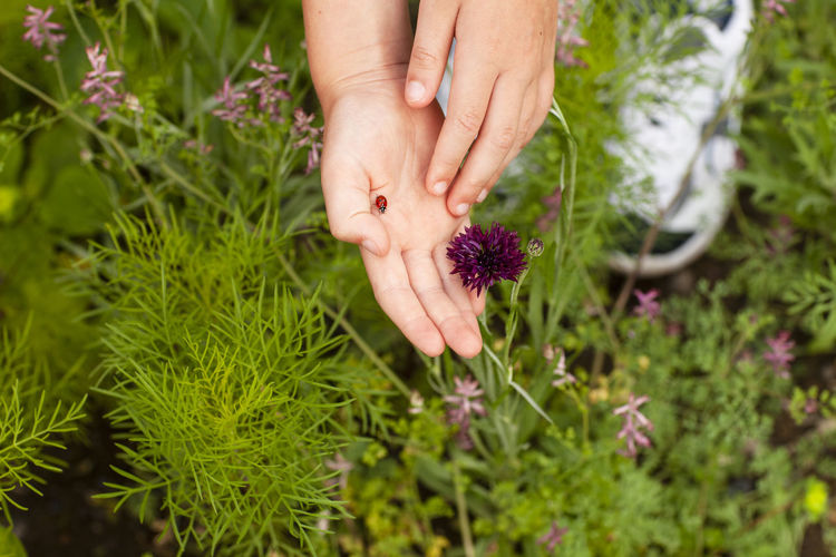 Cropped hand with ladybug by flowering plants