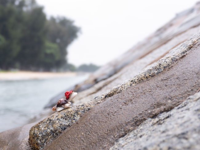 Toy tortoise in red hat climbing up rocky slope in beach, Tortoise Turtle Toy Analogy Beach Sea Rock Slope Groyne Groin Climbing Difficulty Effort Struggle Trees Red Hat Rocky Nature Up
