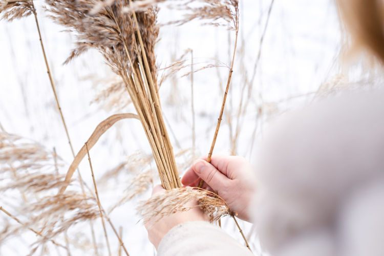 A young woman in a beige dress of neutral colors collects pampas grass.