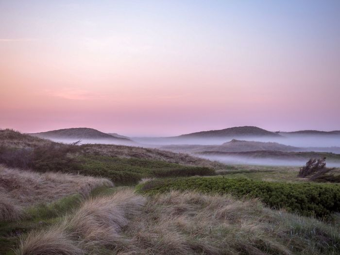 Fog in the dunes in Denmark Northsea Dunes Misty Landscape Mist Denmark Foggy Sunset Foggy Landscape Fog Sky Environment Scenics - Nature Beauty In Nature Mountain Landscape Tranquility Plant Sunset Tranquil Scene Nature Non-urban Scene No People Land Outdoors Idyllic Remote Growth