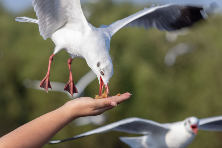 Cropped hand of woman feeding seagull outdoors