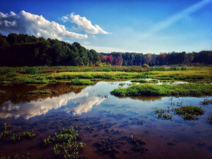 Urban Escape Meadow Wetland Weekend