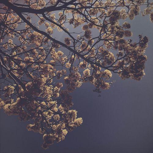 Primavera adelantada II Streetphotography IPhoneography Hipstamatic Urban@ndante Tree Nature