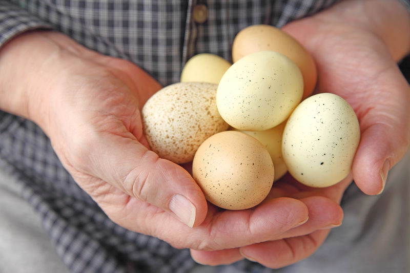 Close-Up Of Man Holding Eggs