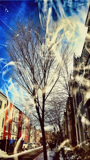 Smoke blown through branches towards blue . . . Check This Out Street Photography Look Closer Urban Landscape Streamzoofamily Urban Art Tadaa Community Eyem Best Edits TreePorn Streetphotography