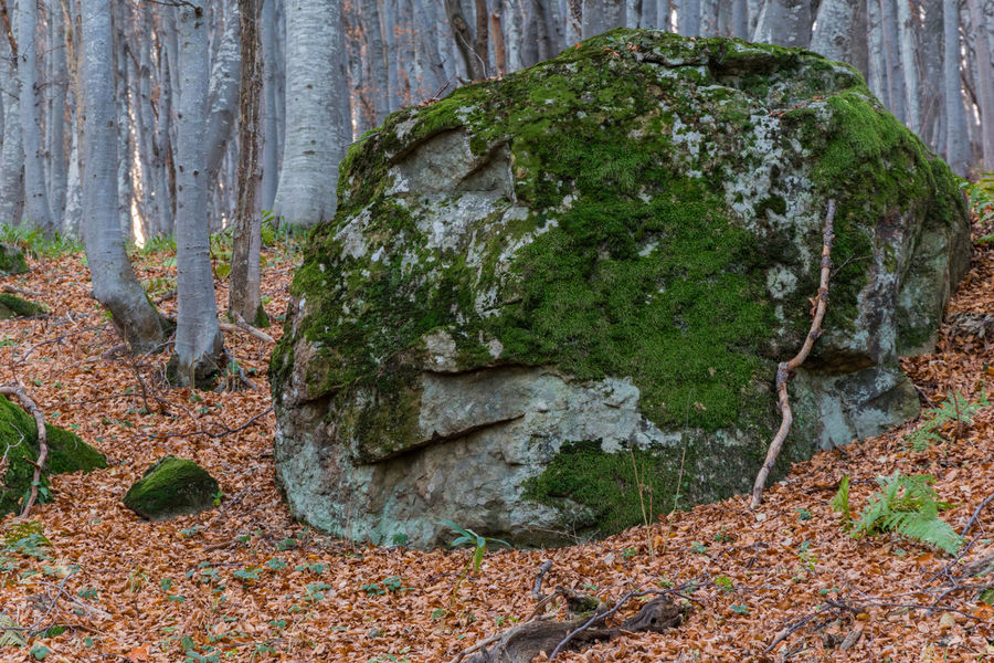 Beauty In Nature Fallen Leaves Forest Nature No People Outdoors Rock Stone Vitosha Mountain Sofia, Bulgaria Face In Nature