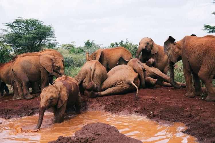 Elephants standing on muddy land against sky