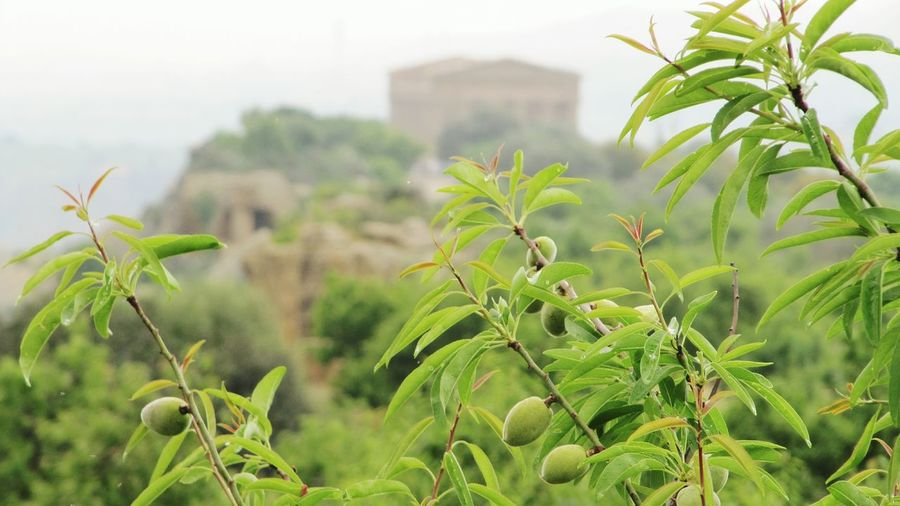 The Valley of Temples in Agrigento...magical! Temple Greek Temple Depht Of Field Landscape TreePorn Eyemnaturelover Eyem Best Shots Traveling Colorful Simple Moment