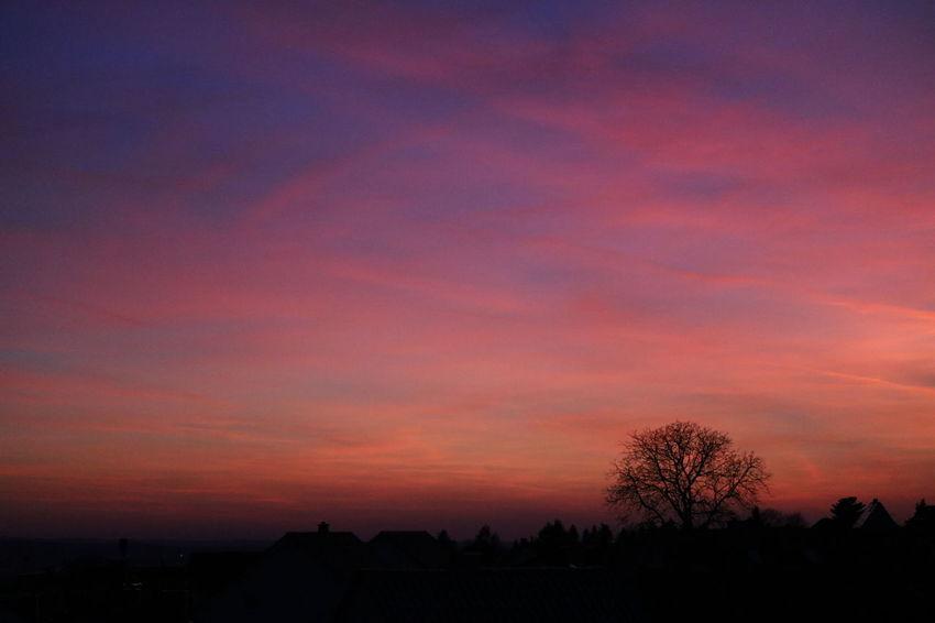 *Abendrot* Am Himmel wachsen Cirrusweben, so kurz vor Sonnenuntergang, und Espenblätter zitternd beben im Wind, der streicht den Hang entlang. Der kühle Abend meldet sich, verweile noch im Garten, im Freien bleibend möchte ich das Abendrot erwarten. Sobald am Himmel rote Glut die Bläue brennend tönt, der warmen Farben milde Flut die Landschaft sanft verwöhnt, werd' ich das wunderschöne Bild mit meinen Augen trinken und kann dann, wenn mein Durst gestillt, in tiefe Andacht sinken. (© Ingrid Herta Drewing) EyeEm Gallery EyeEm Sunset EyeEmBestPics For My Friends 😍😘🎁 From My Window Good Night World Ladyphotographerofthemonth Love To Take Photos ❤ Lovely Weather No Need To Escape, Im In Wonderland! No People Peace And Quiet Poetry In Pictures Silent Moment Sky And Clouds Sky_collection Sunset Sunset And Clouds  Sunset Silhouettes Sunsetlover Sunsets Sweet Dreams The Purist (no Edit, No Filter) Untamed Heart My Gift For You ✨